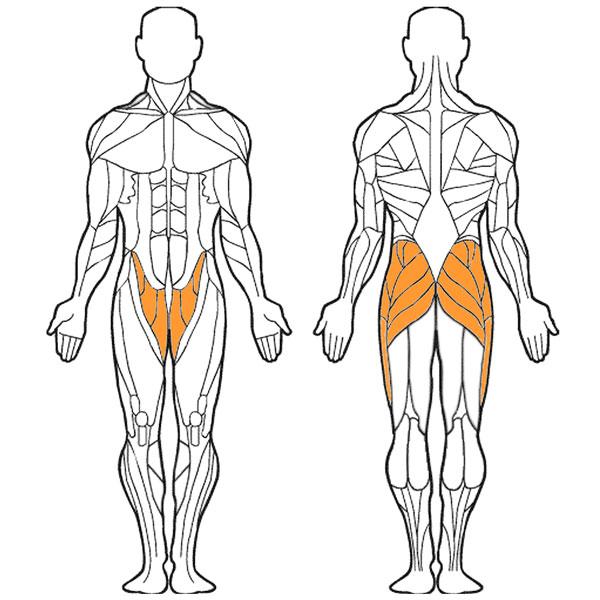 Тренажер для отводящих и приводящих мышц бедра фото прокачиваемых мышц